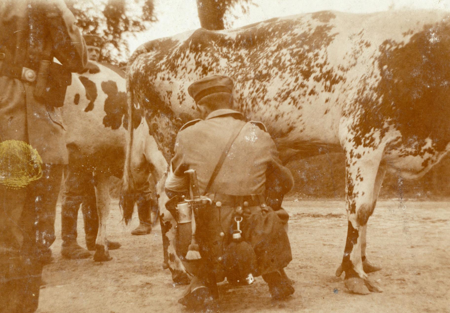 18. september 1914. Livsfarlig malkning.