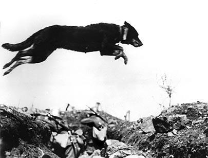 29. oktober 1916. Desertøren Jakob Moos: Forfulgt af en rasende vagthund
