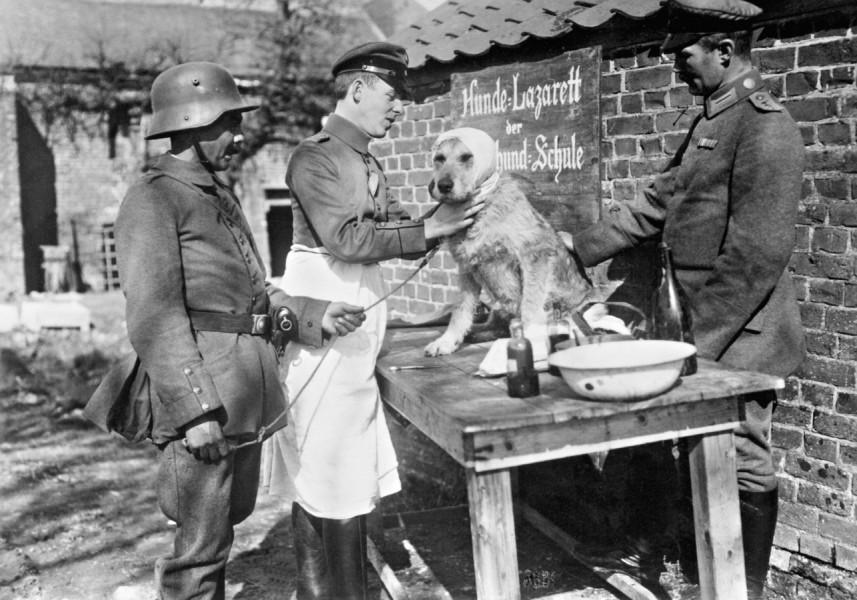 19. September 1914. Dagens nyheder, bl.a. om brugen af sanitetshunde i krigen