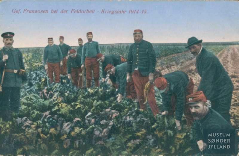 24. februar 1915. Fangelejren ved Tinglev, grisejagt og andre nyheder fra Sønderjylland