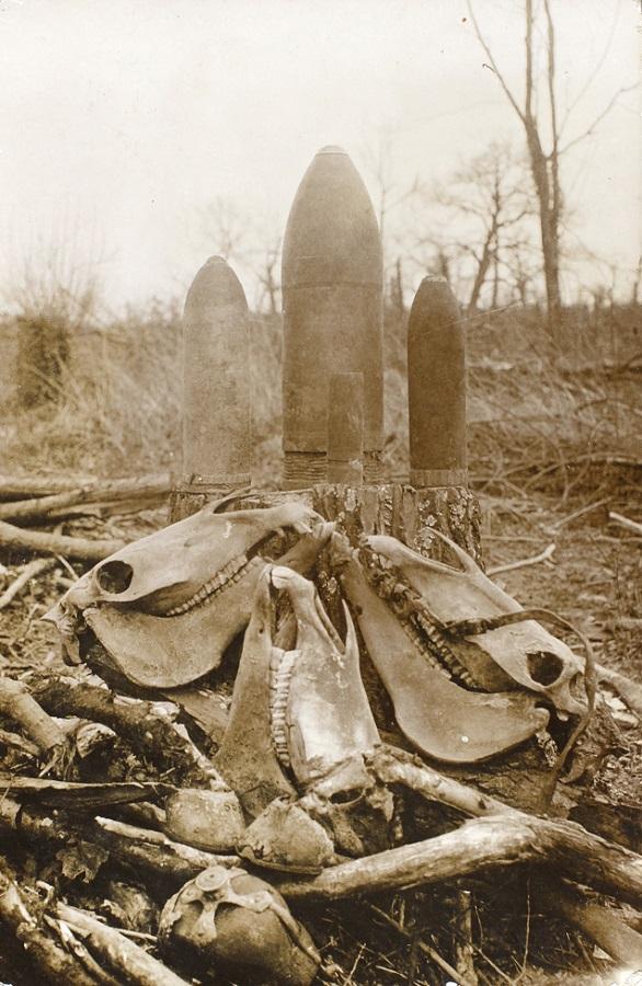 19. maj 1915 – Fra billedsamlingen: Hestegravplads