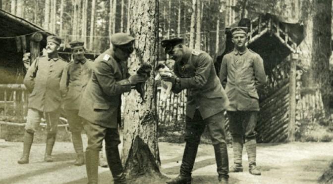 31. juli 1916. Hundehvalpe og krigskontrabande